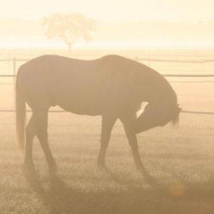 Misty Pony